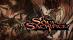 Soul Sacrifice [CN]